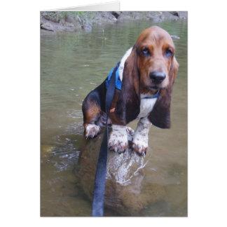 Basset hound card