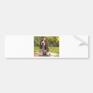 Basset Hound Dog Bumper Sticker