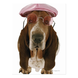 Basset hound in sunglasses and cap postcard