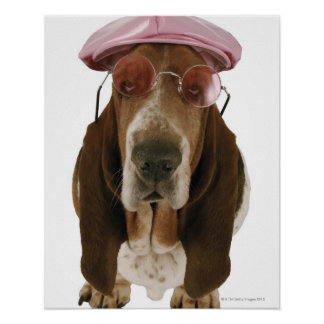 Basset hound in sunglasses and cap poster