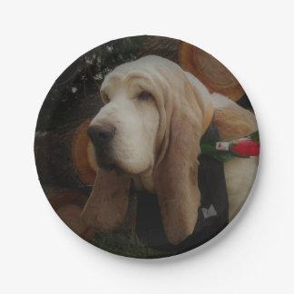 Basset hound paper plates