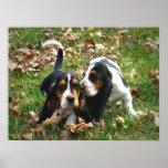 Basset Hound Puppies Poster