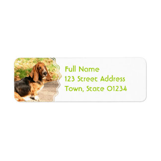 Basset Hound Sitting Mailing Labels