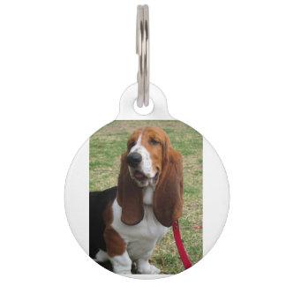 basset-hound-sitting pet name tag