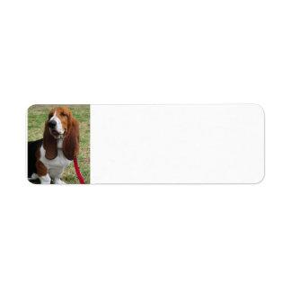 basset-hound-sitting return address label