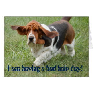 "Basset Hound with ""bad hair day"" greeting card"