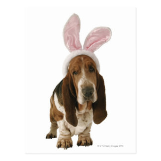 Basset hound with bunny ears postcard
