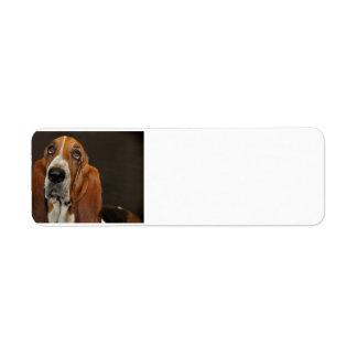 bassett hound 2