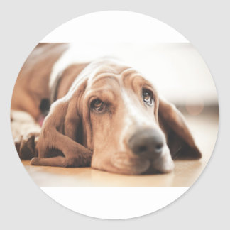 Bassett Hound Puppy Dog Round Sticker