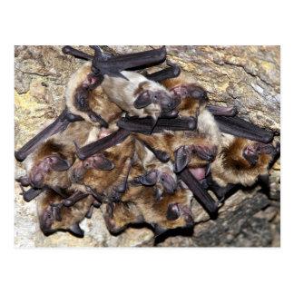 Bat Attack Day Postcard