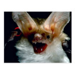 Bat Post Cards