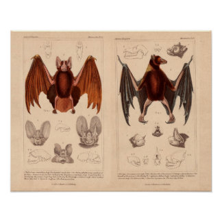 Bat print fruit bat and long eared bat