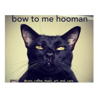 Batcat: Bow to me hooman Postcard