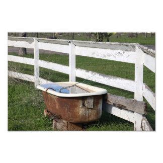 Bath on the Farm Photo Print