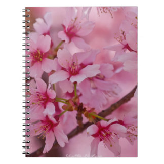 Bathed in Pink Japanese Cherry Blossoms Note Book