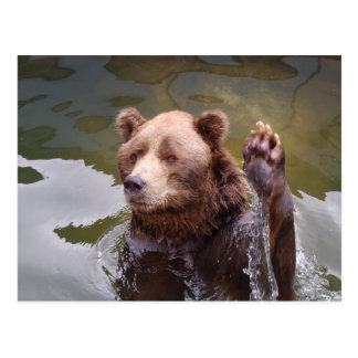 Bathing Brown Bear  Postcard
