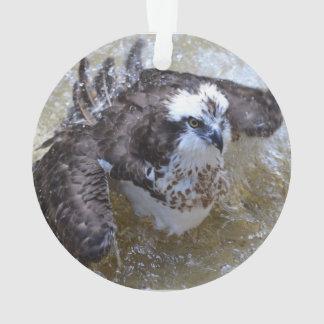 Bathing Osprey