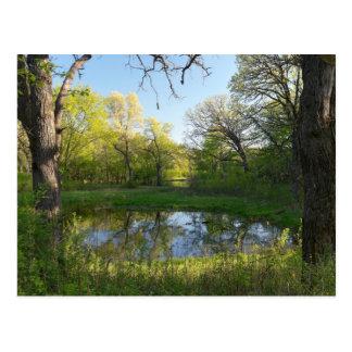 Battle Creek Pond and Forest Postcard