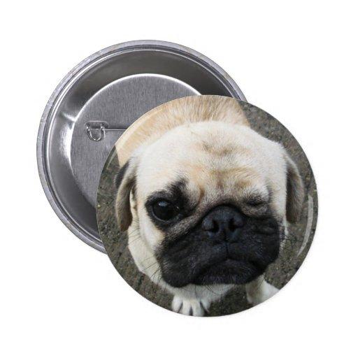 Bauwk ... Pug Dog ... Thailand Buttons
