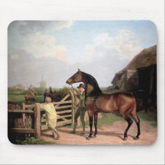 Bay Ascham ~ a stallion lead through a gate Mouse Pad