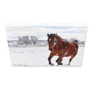 Bay Colored Horse Galloping in the Snow Canvas Print
