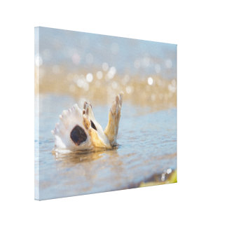 Bay Oyster 1 Canvas Print