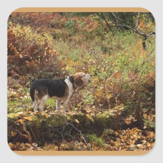 Baying Beagle Square Sticker