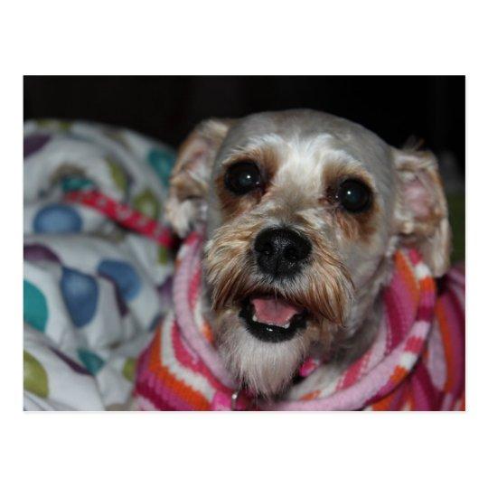 """""""Bayleigh"""" Dog Postcard"""