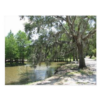 Bayou Tree, Avery Island, Louisiana Postcard