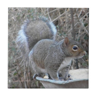 BB- Funny Squirrel Photography Tile
