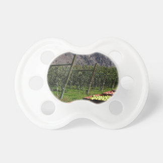 BC Apple Harvest Baby Pacifiers