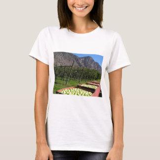 BC Apple Harvest T-Shirt