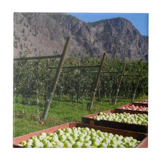 BC Apple Harvest Tiles