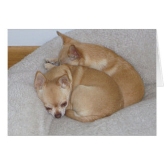 BC- Cute Chihuahua Puppy Greeting Cards
