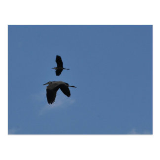 Be strong - Egrets in flight Postcard