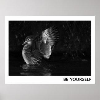 Be Yourself Female Mandarin Duck Black White Photo Poster