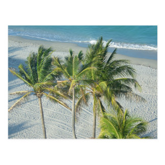 Beach and Palm Trees at Hollywood, FL Postcard