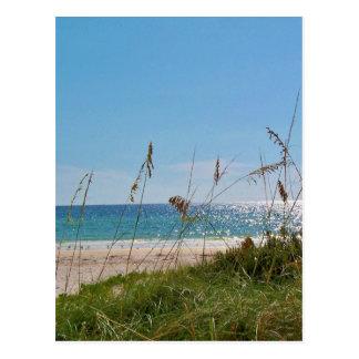 Beach and Sea Oats Postcard