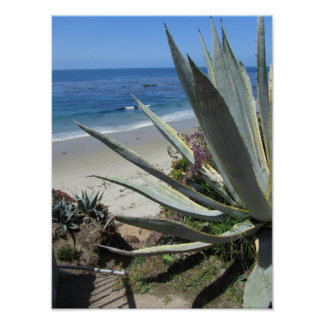 Beach at Laguna Beach - California coast Poster