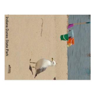 Beach Birdie Postcard