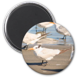 Beach Birds magnet