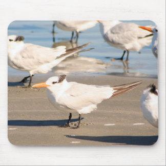 Beach Birds mousepad