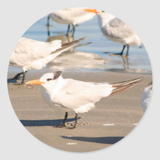 Beach Birds sticker