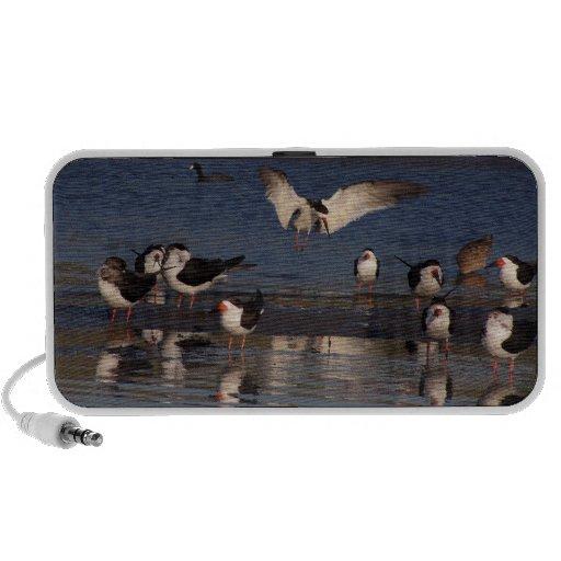 Beach Black Skimmers Birds OrigAudio Doodle Speake iPhone Speakers