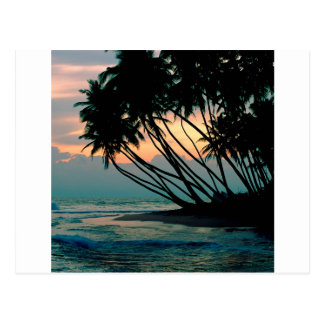 Beach Colombo Sri Lanka Postcard