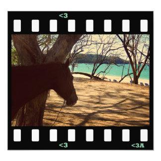 beach- costa rica photograph