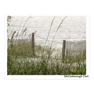 Beach Grass and Fence Postcard