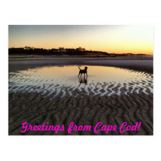 Beach Greeting from Cape Cod Postcard