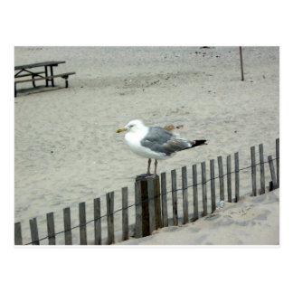 Beach Gull Postcard