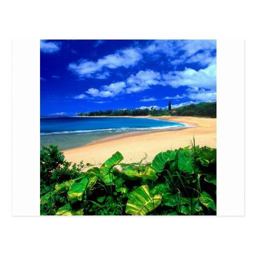 Beach Haena Kauai Hawaii Post Cards